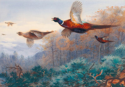 Sir Archibald Thorburn, FSZ, 'Pheasants In Flight', 21st Century
