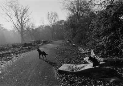 Mark Steinmetz, 'Athens, GA (Dogs With Mattresses)', 1997