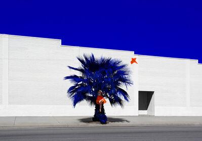 Reine Paradis, 'Palm', 2014-2016