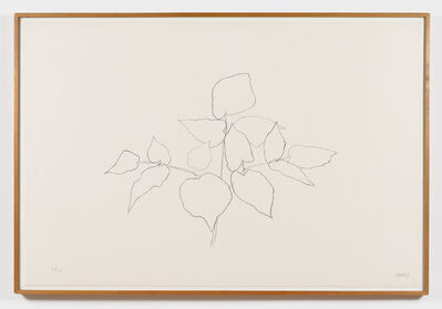 Ellsworth Kelly, 'Sarsparilla (or Ailanthus Leaves)', 1979-1980