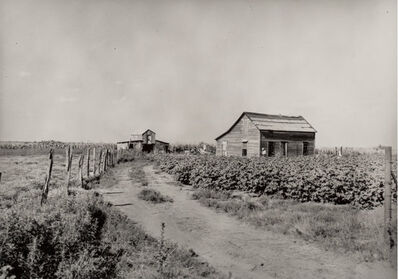 Dorothea Lange, 'Mid-Continent Small Cotton Farm on US 62, Oklahoma', 1938