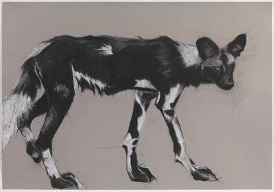 Rose Corcoran, 'Wild Dog on Grey IV', 2018
