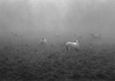George Tice, 'Sheep in Fog, Lancaster, PA', 1966