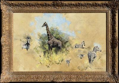 David Shepherd, 'Studies of Zebra and Giraffe', 20th Century