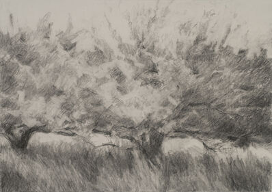 Connie Hayes, 'Orchard #8'
