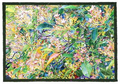 Joseph Raffael, 'Life Dreaming', 2014