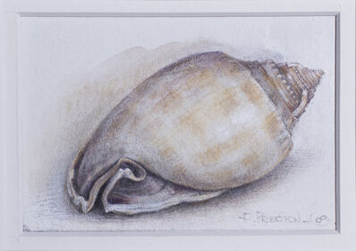 Robert Preston, 'Bonnet Shell', 2009