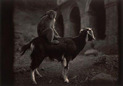 Pentti Sammallahti, 'Swayambhunath, Nepal (Monkey on Goat)', 1994