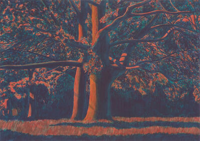 Martin Jacobson, 'Oak trees, evening', 2012