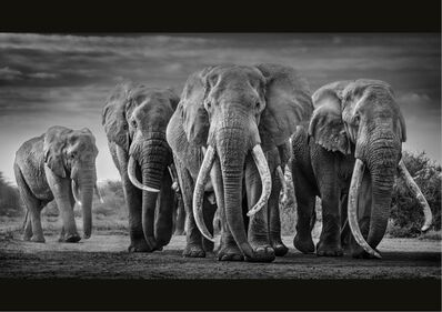 David Yarrow, 'Squad', 2019