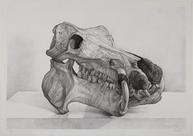 Claudio Bravo, 'Craneo hipopotamo (hippopotamus skull)', 2007