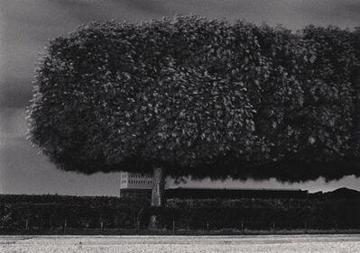 Michael Kenna, 'Windy Trees, Les Tuileries, Paris, France', 1984