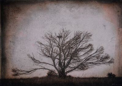 Kate Breakey, 'Bare Tree with Nest, Nullarbour Plain, South Australia'