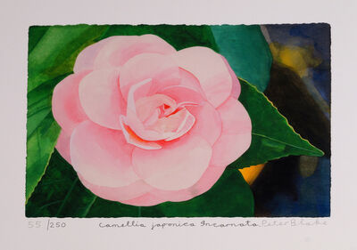 Peter Blake, 'Camellia Japonica Incarnata'