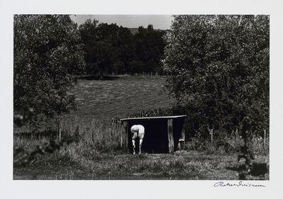 Robert Doisneau, 'Le Cheval Blanc', 1972