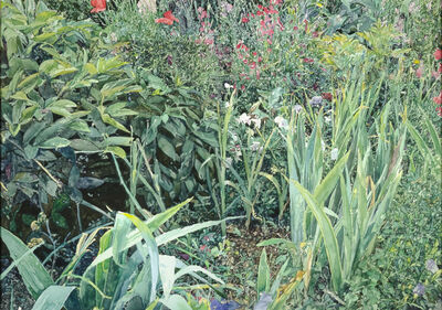 William Nichols, 'Gardens at Giverny', 1990