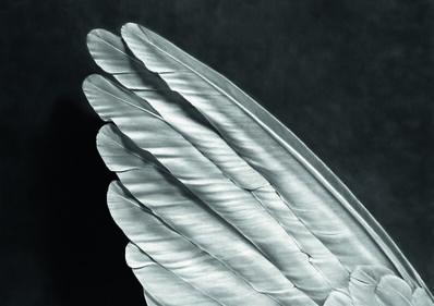 Robert Longo, 'Angel's Wing', 2014