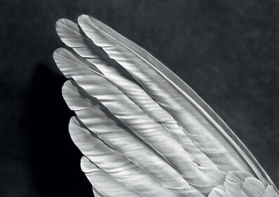 Robert Longo, 'Angel's Wing', 2014