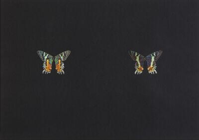 Maximilian Prüfer, 'Black Butterfly-Print #9', 2017
