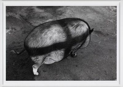 Tom Sandberg, 'Untitled', 2008