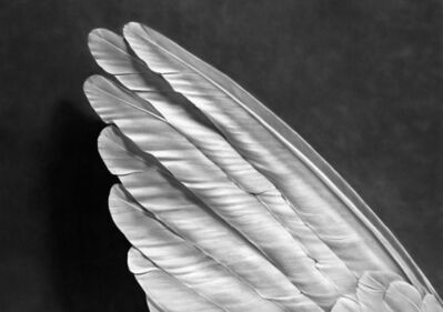 Robert Longo, 'Untitled (Angel's Wing) ', 2014