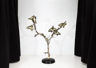 Sanna Kannisto, 'Papilio machaon', 2017