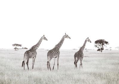Caroline Gibello, 'Three Giraffes', 2014