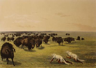 George Catlin, 'Buffalo Hunt Under the White Wolf Skin', 1844