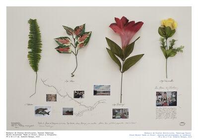 Alberto Baraya, 'Taxones Tabatinga - Herbario de Plantas Artificiale', 2014