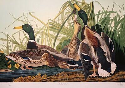 John James Audubon, 'Mallard Ducks - Publisher's Proof  (Plate 221) Signed, Numbered ', 1992