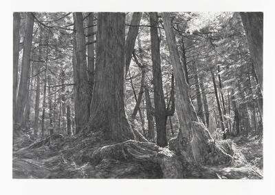Michael Kareken, 'Trees Near Second Beach: Olympic Peninsula', 2018