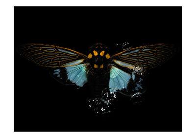 Alexander James Hamilton, 'Swarm 0571', 2009-2015