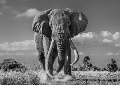 David Yarrow, 'Tim', 2019