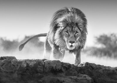 David Yarrow, 'Relentless', ca. 2017