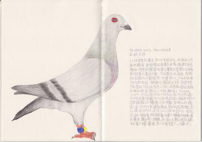 Lee Lichung, 'Pigeon - TAIWAN 2015-0420126', 2018
