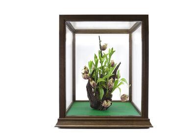 Robert Zhao Renhui, 'Nepenthes sg. rh Yui', 2014