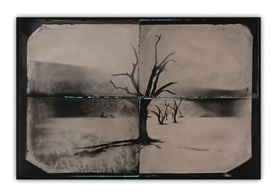Lyle Owerko, 'African Trees Tintype Project 1', 2018