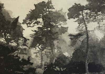 Michael O'Shea, 'Foggy Pines', 2019