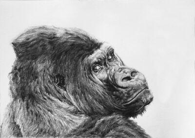 Aythami Armas, 'Gorilla'