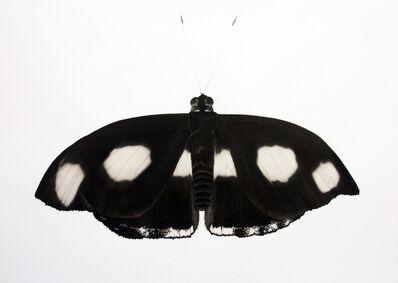 Jonathan Delafield Cook, 'Grecian Shoemaker Butterfly', 2018-2019