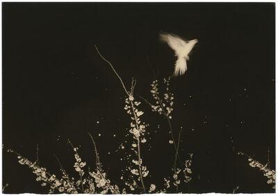 Yamamoto Masao, 'Untitled #1154', 2002
