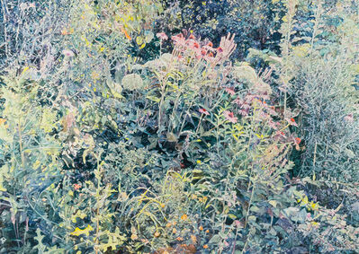 William Nichols, 'Wild Garden', 2016