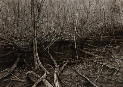 Nicholas Blowers, 'Narcissus, Lake St Clair Leatherwood Interior', 2015