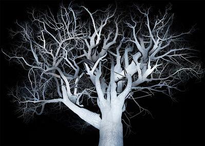 Fan Xi, 'The Tree-2', 2014-2016
