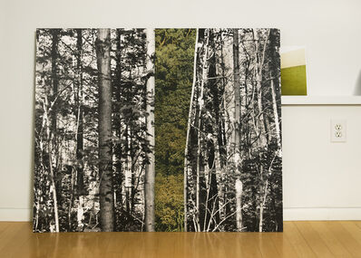 Eileen Neff, 'Forest in the Studio', 2014