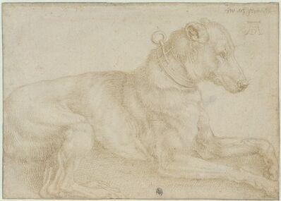 Albrecht Dürer, 'Dog Resting', c. 1520