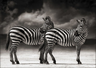 Nick Brandt, 'Portrait of two Zebras turning heads, Ngorongoro Crater', 2005