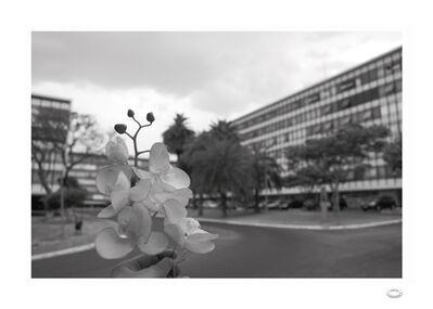 Alberto Baraya, 'Comparative modernist studies: Quadra 1-A apartamentos palmera - Brasília & Phalenopsis ', 2010-2011