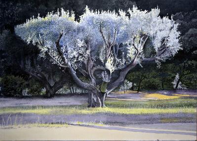 Óscar Tusquets Blanca, 'Olivera cervantina', 2017