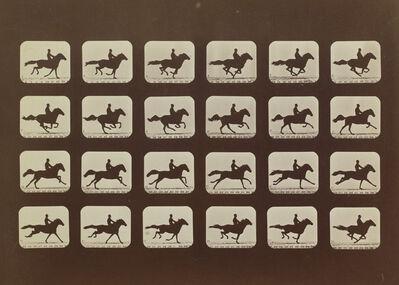 Eadweard Muybridge, 'Phayne L. Running Stride, 19 ft., 9 in., Plate XVI', 1878-1879
